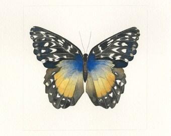 Butterfly #14 (Original)