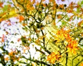 Magic Tree - Japanese Pattern, Flower Nature, Scenery Photography, Gorgeous Print, Floral Art, Yellow Decor, Orange Blooms, Eucalyptus Tree