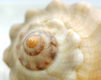 photography pastel _macrophotographie_telechargement shell immediat_ete mediteranee_fond of screen