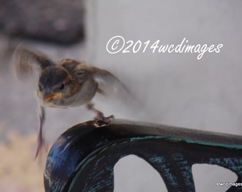 Digital Art Photography Baby Bird Learning to Fly Fine Art Home Decor Animals Nature