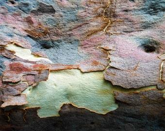 Natural abstract - eucalyptus bark #11
