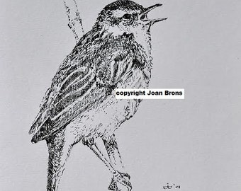 Original pen drawing little singing bird