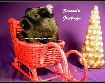 "Black Satin GUINEA PIG 8x10"" Christmas Portrait Photo - Limited Edition Print"