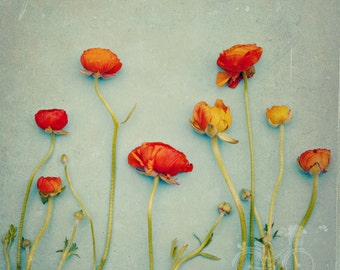 Fine Art Photograph, Ranunculus Photo, Mixed Media Art, Garden Art, Botanical Print, Orange, Teal, Floral Decor, Flower Art, Square Art