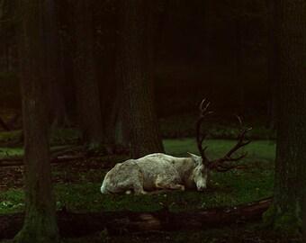 WHITE DEER | photography print