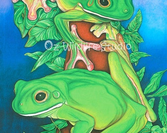 Green Tree Frogs Art - Rainforest Rendezvous - Unmatted Print