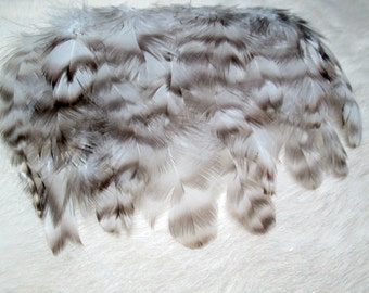 "Black White Grey Feather Striped Barred Cochin Rooster Real Bird Feathers Grizzly Feather Plumage Feathers For Crafts 25 @ 3 - 3.5"" / 2139"
