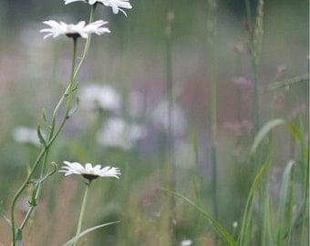 In a Field of Flowers Photo