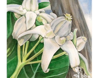 white flower watercolor painting, original botanical art, green and white spring home decor