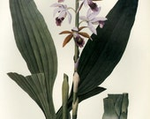 Orchid Botanical Print Book Plate Vintage SALE Buy 3, get 1 Free