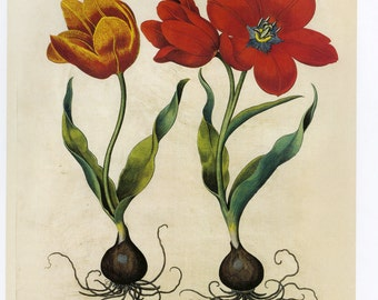 Vintage Tulips Red Print Book Plate SALE Buy 3, get 1 Free