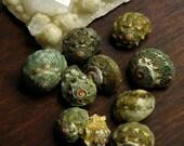 Sea Shells Drilled 10 Small-Medium 10 qty