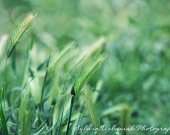 Nature Photography  Macro Photography Spring Photography grass blade photography  pastels green Grass wall art   Fine Art Photography Print