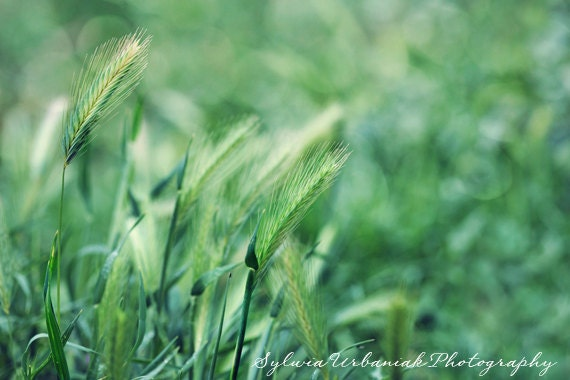 grass macro photography - photo #35