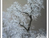 Misty Mystery - Tree in an Ice Storm- Digital Photography - OlsonPhotoandDesign