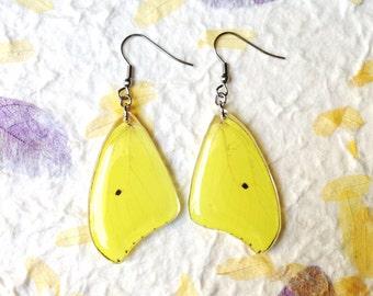 Lemon Yellow Earrings. Real Butterfly Earrings. Nature Jewelry. Stainless Steel. Lemon Yellow Wings