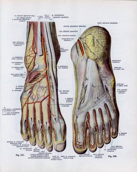 Items Similar To Vintage Medical Page Human Body Diagram