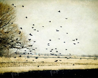 Bird Photography Download, Sky, Flock of Birds, Flying Birds,Tree, Minimalistic, Landscape, Rustic, 12x8, Printable Photo, Earth tone, blue