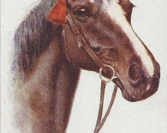 A Birthday Bay - Vintage 1920s Artist-Signed Bridled Horse Postcard