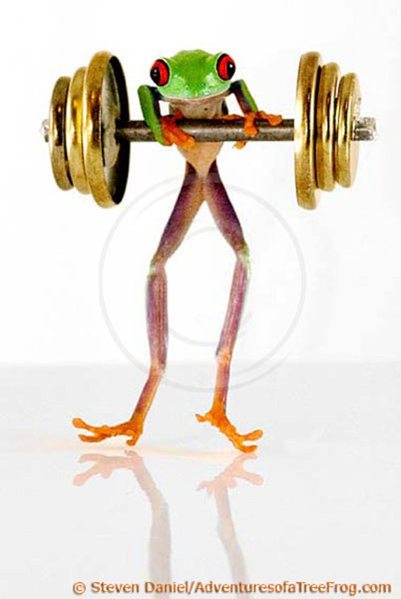 Workout, Barbells, LIVE Tree Frog, Exercise, Frog Working Out