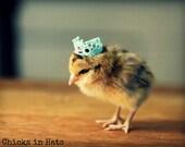 Photo Print 8x10 Chick Wearing Blue Crown Photograph