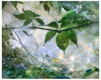Green Leaves photography, rain art picture, summer nature decor, large wall art, leaves art print, artwork, 8x10, 11x14, 16x20, 20x24, 24x30