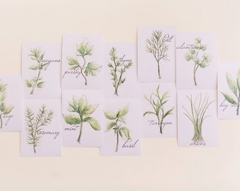 Set of 12 Cooking Herbs Prints