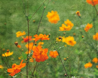 Field of Flowers II  Photographic Print - Orange,  green, floral, Romantic, whimsical, shabby, texture, photography, cottage, decor, art