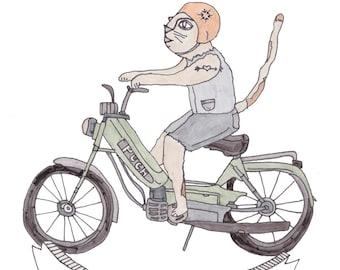 Moped Cat