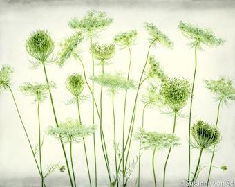 Flower Photography, Soft Green Flower Photo, Fine Art Print, Pastels, Botanical Print, Queen Ann's Lace, Delicate, Home Decor, Summer