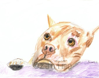 Brownie the brown pitbull, fine art print of a colored pencil drawing, 8 x 10 inch archival print