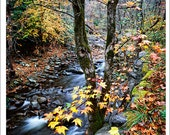 "Smoky Mountains Hand Made Greeting Cards from William Britten Photography ""Creekside Sweet Gum"""