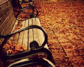 Autumn Photography. Autumn photo. Fall scene. October. Autumn print. Fall color. Fall photo. Autumn bench. Fine art photo print.