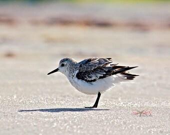 Beach Photography, Shorebird Seascape Photograph, Summer Wall Art, Beach Decor, Shore Birds,
