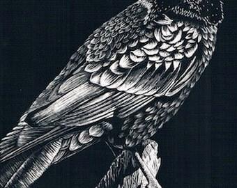 """Before the Caw - Original Scratchboard - Raven - Miniature (5"""" x 7"""")"""