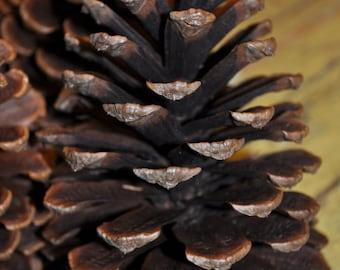 Large Pine Cones (3)