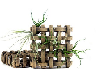 Air Plant Waffle