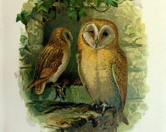 Vintage etching engraving barn owl