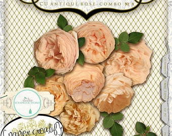 Antique Digital Rose Collection by Papier Creatif CU OK