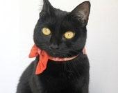 Dark Orange Bow Tie for Cat
