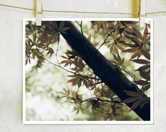 Shadows - botanical, fine art film photography