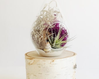 Seashell Air Plant Terrarium // Air Plant Glass Teardrop