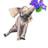 wildvioletta