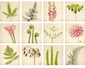 Botanical Prints Mini Portfolio, Botanical Print Set, Fern Art, Floral Wall Art, Pink, Green, Taupe, 5x5 Print Set, Nature Photography Set
