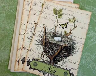 Vintage Bird Nest Notecards - Bird and Nest Notecards - Flat Notecards, Nature's Nest, Moss green - Set of 3