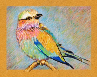 Lilac Breasted Roller Bird 8 x 10 print