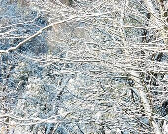 Snow Scene Photograph,  Winter Art, Abstract Photography, Woodland Decor, Snow Photo, Nature Photography, Holiday Decor