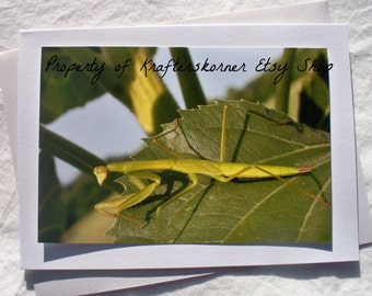 Photo Card Praying Mantis Insect Envelope Included!