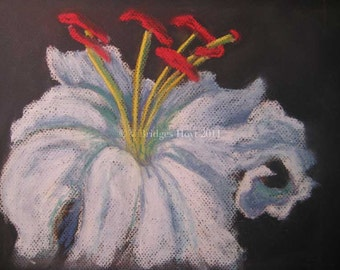 SPECIAL White Lily flower, original pastel drawing, birthday gift, Texas artist
