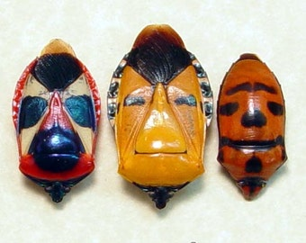 Black Friday/Cyber Monday Sale Real Framed Hemiptera Sp Man Face Beetle Set of 3 8221